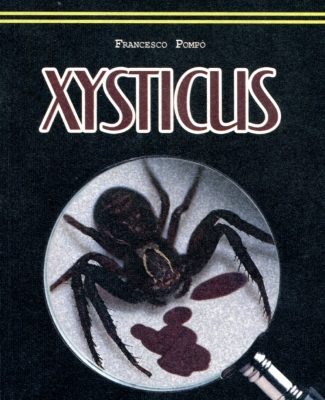 xysticus042